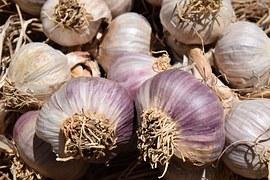 garlic-1455424__180